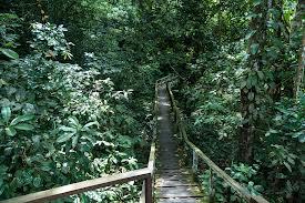 Településre bukkantak a dzsungelben