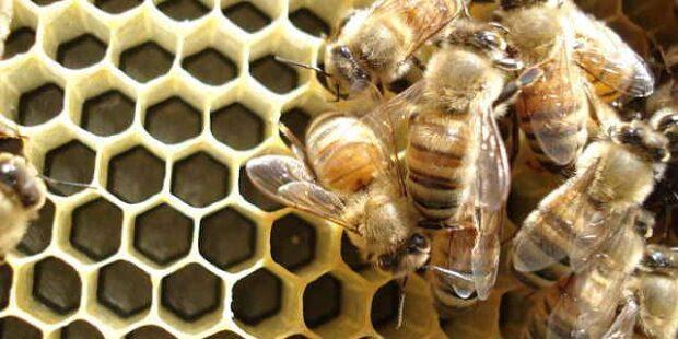 méhkenyér